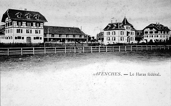 Avenches: Postcard of the Swiss National Stud Farm in the 1930s