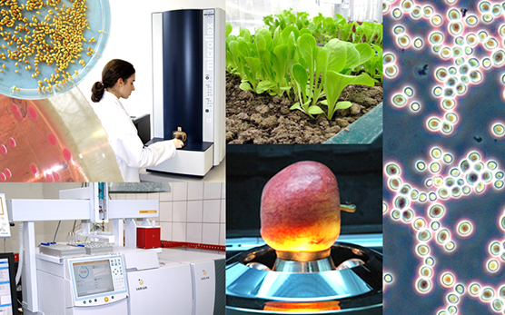 Project Microbiology and Analysis of Foods of Plant Origin