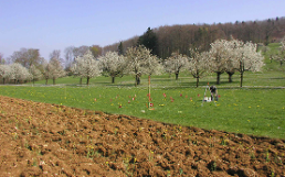 Swiss Soil Monitoring Network (NABO)