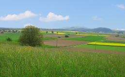 Rural Landscape and Countryside