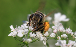 Bee Products, Pesticide Risks and Reference Laboratory
