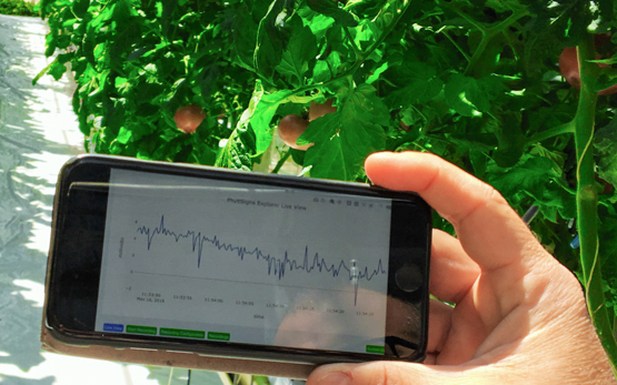 Digital Data for the Management of Greenhouse Crops