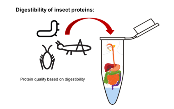 Digestibility of Insect Proteins