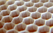 Cells made from new wax in comb