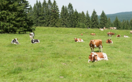 Grazing Systems Ruminants