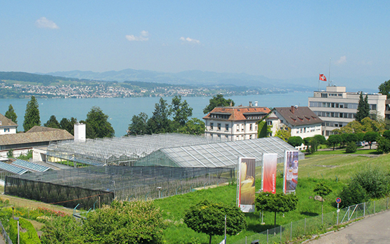 Site Wädenswil